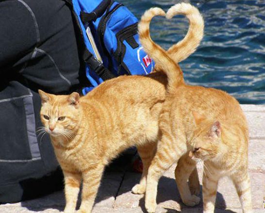 Cats tails making a heart